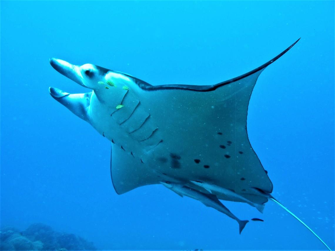 https://tahititourisme.de/wp-content/uploads/2017/08/Bora-Bora-Reef-Discovery-3.jpg