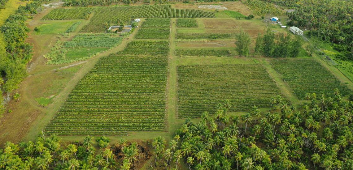 https://tahititourisme.de/wp-content/uploads/2017/08/Vin-de-Tahiti_1140x550-min.png