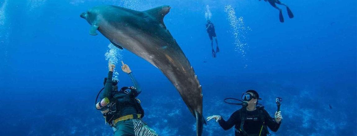https://tahititourisme.de/wp-content/uploads/2017/10/Rangiroa-Diving-Center-1150x440px.jpg