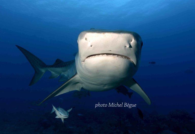 Tahiti – Dive the Sharks!