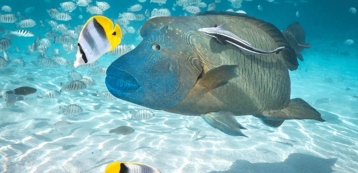 https://tahititourisme.de/wp-content/uploads/2020/02/SnorkelingExpeditions2_1140x550-min.png