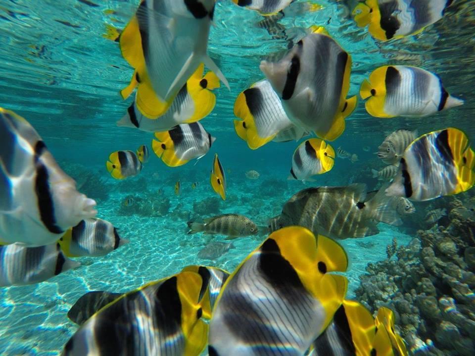 https://tahititourisme.de/wp-content/uploads/2020/06/jardin-corail-tahaa-5.jpg