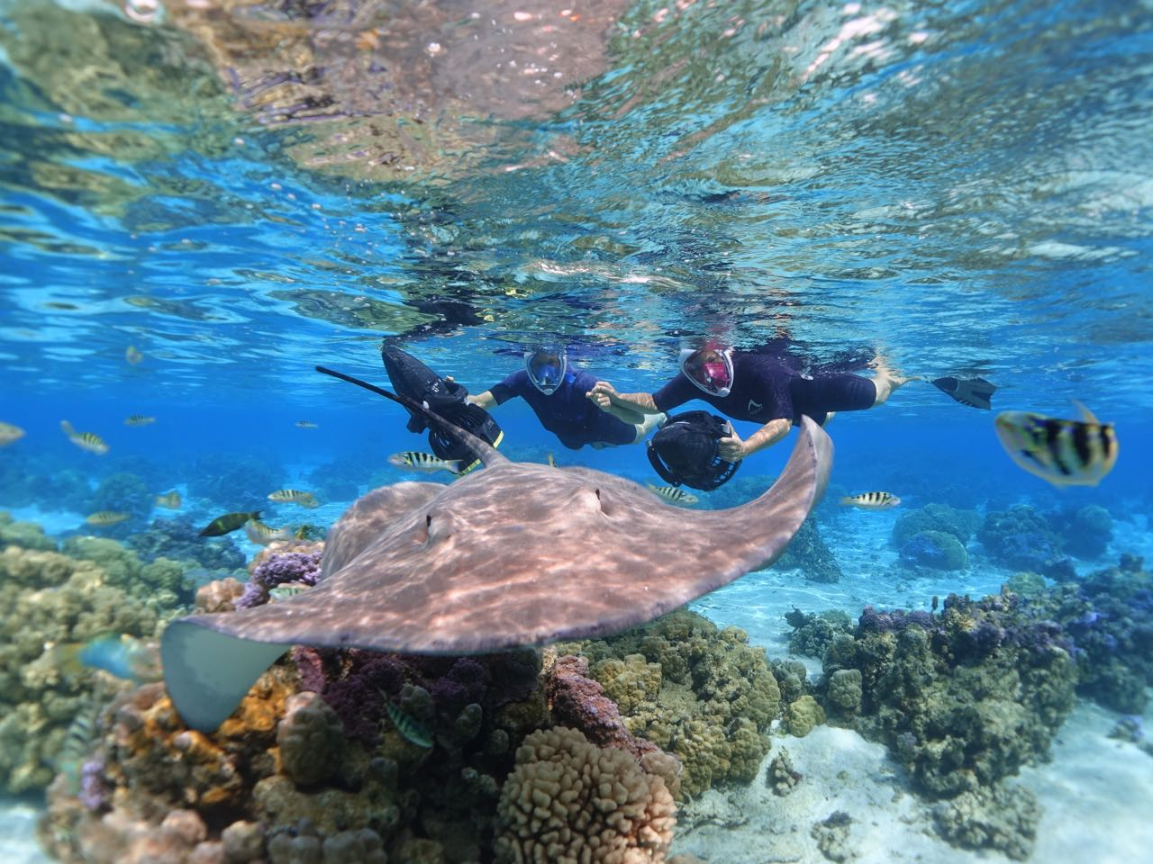 https://tahititourisme.de/wp-content/uploads/2020/09/Sea-Scooter-Snorkeling-Tour-à-moorea-copie-2.jpg